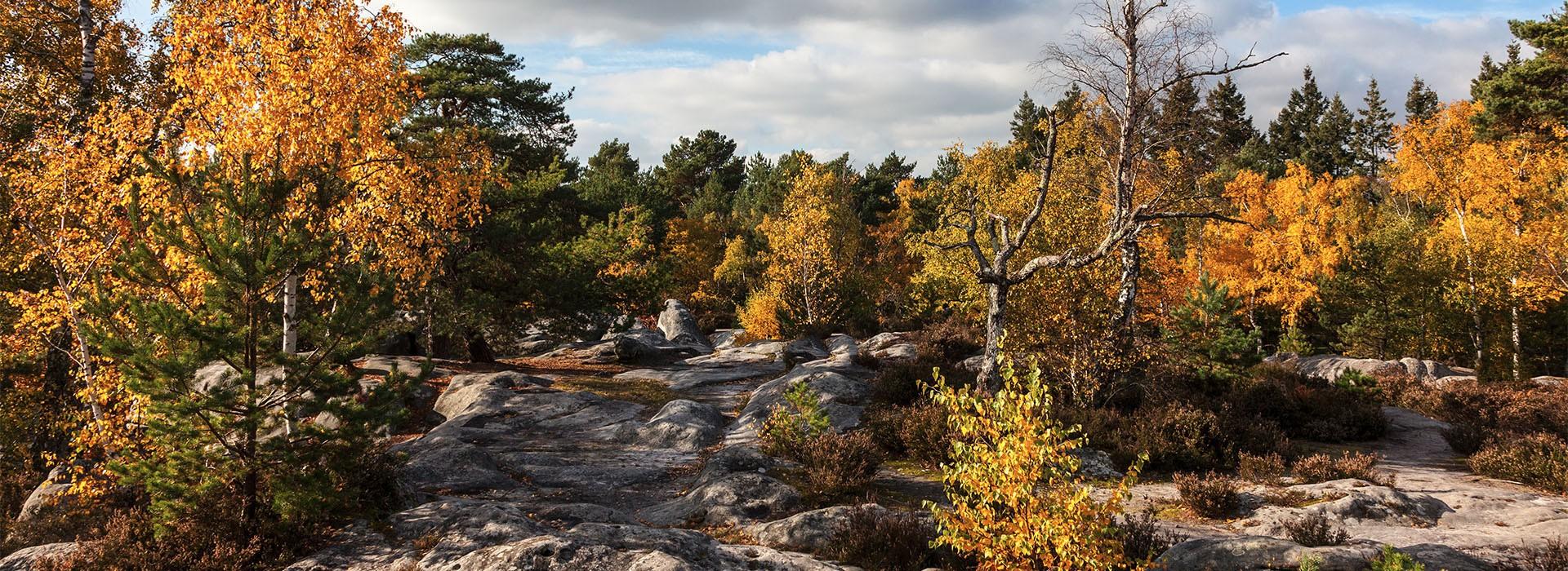 Fontainebleau4-WEB